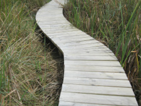 Doing the Duckboard Walk for Whitebait / Inanga