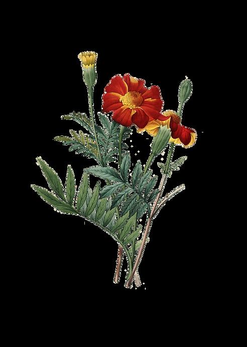 plus-belle-fleur-meilleur-choix-des-plus