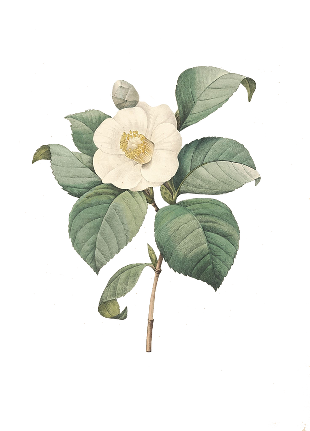 fleur-gravure-contemporain-gravures-de-f