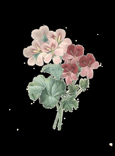 fleurrose.png