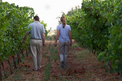 Pensando en el viñedo