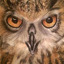 owl-drawing-by-sandy-clifton-sm-jpg