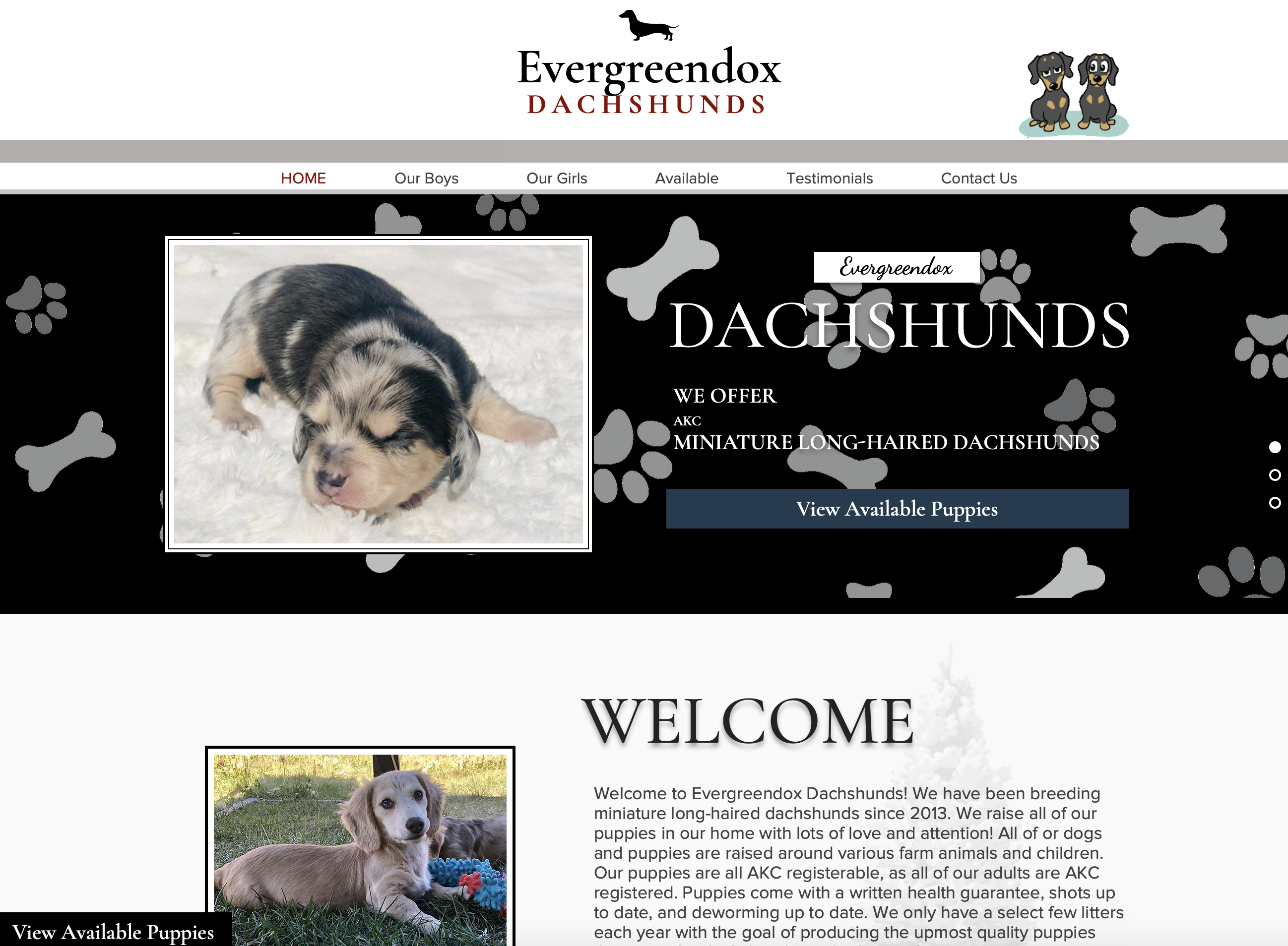 Evergreendox Dachshunds