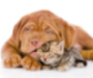 Puppy chewing cat playfully