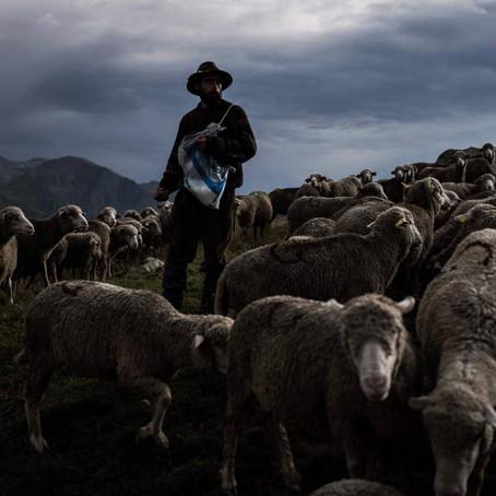 A veces pastor a veces rebaño. La realidad vivida desde el cuadrante de lo contingente.