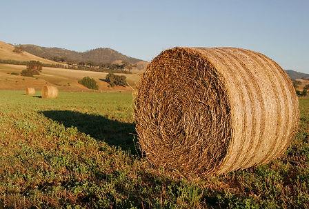 Round_hay_bale_at_dawn02.jpg