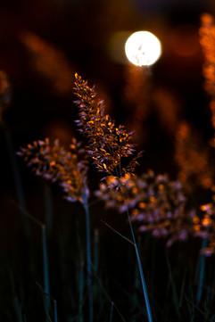 Fluers de nuit