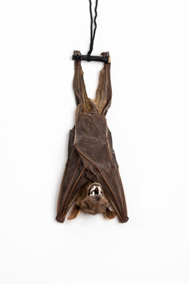 Taxidermy Bat 2020