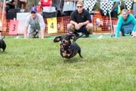 Dog Race 2017