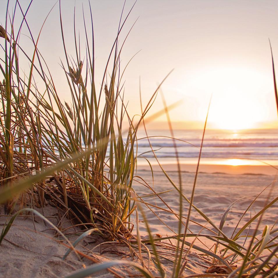 Sea grass sun