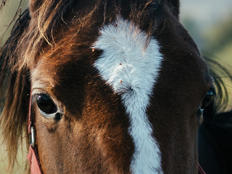 How do you take great pictures of a horse?