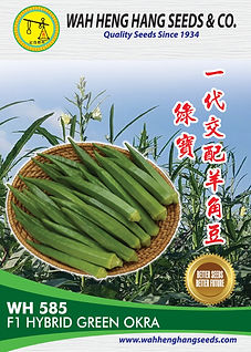 100 x 140mm WH585_F1 Hybrid Green Okra-0