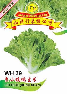 WH39 Lettuce (Dong Shan).jpg