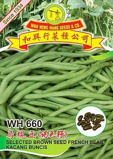 WH660 Selected Brown Seed French Bean.jp
