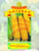 Wh22 Extra Sweet Corn.jpg