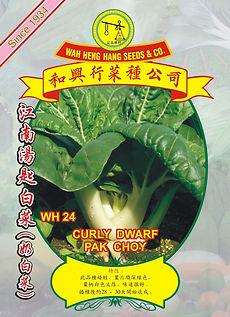 WH24 Curly Dwarf Pak Choy.jpg