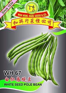 WH 67 White Seed Pole Bean.jpg
