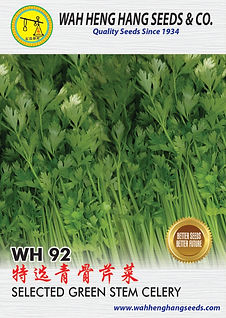 100mm x 140mm WH92_Green Stem Celery-02_