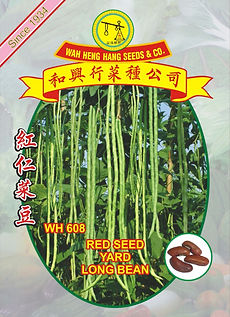 WH608 Red Seed Yard Long Bean.jpg