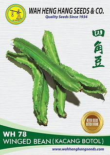 100mm x 140mm_WH78 Winged Bean Kacang Bo