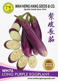 WH76 Long Purple Eggplant.jpg