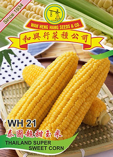 WH21 Thailand Super Sweet Corn.jpg