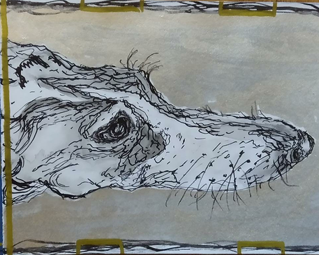 A drawing of the face of a greyhound dog