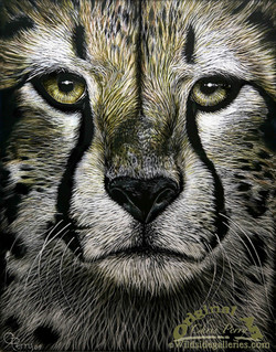 Cheetah RB - Version 2 copy