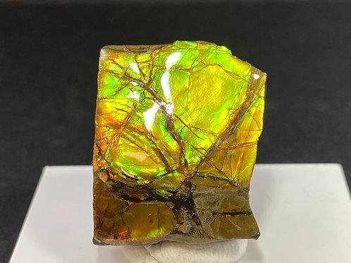 Ammolite / アンモライト