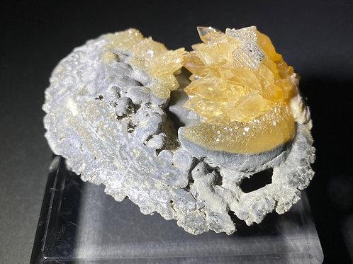 Mercenaria Permagna with Calcite / 貝化石カルサイト