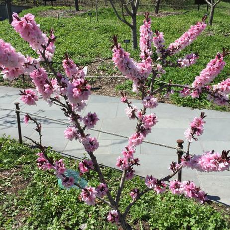 色んな桜がありました