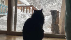 大雪警報中❆