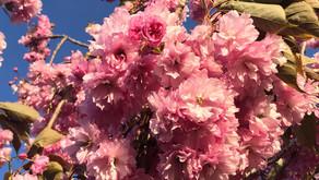 春のいろいろ🌸