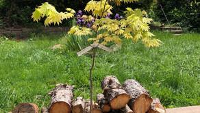 前庭用の植木選び