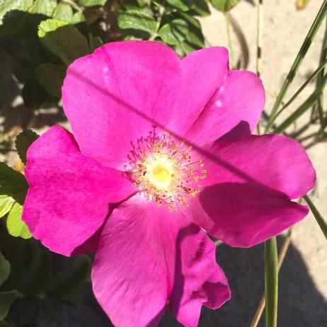 パワースポットで見た花🌸