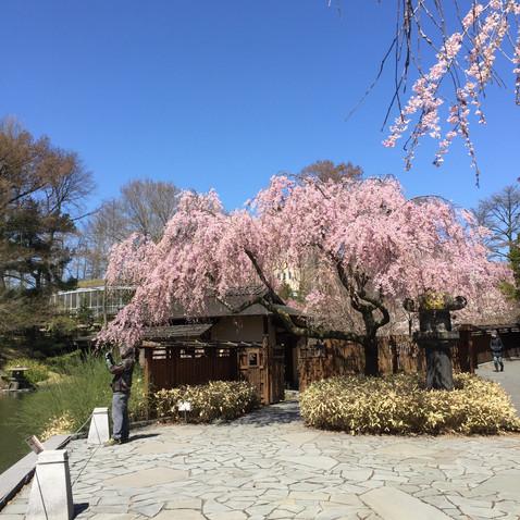 日本庭園ぽく造られていました