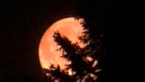 オレンジの月②