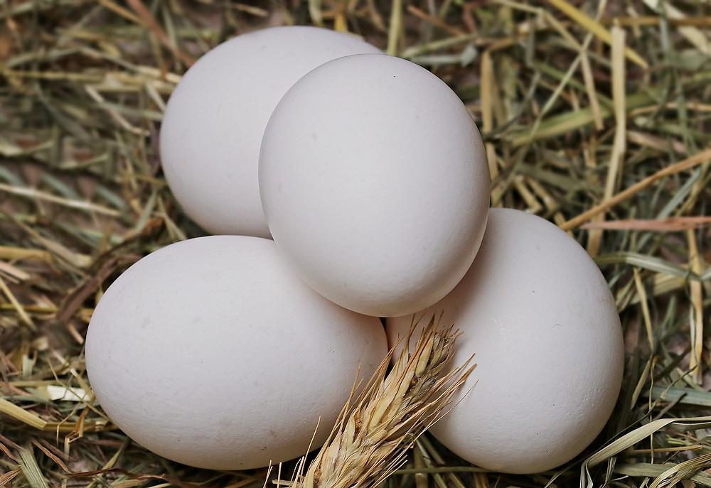 eieren Jacobine