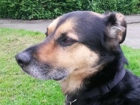 Hondengezelschap