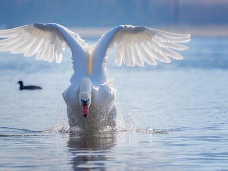 Weggevlogen vogel
