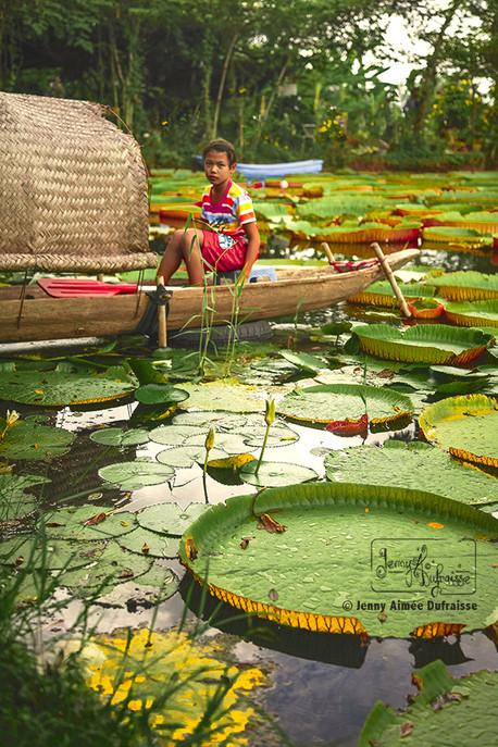 Étang aux nénuphars géants, Phitsanulok. Thaïlande