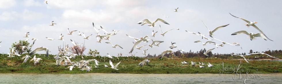 Ile aux oiseaux. Langue de Barbarie, Sénégal