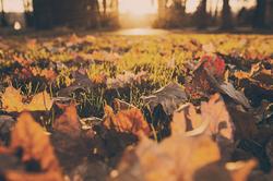 Herbst Wiedereröffnung