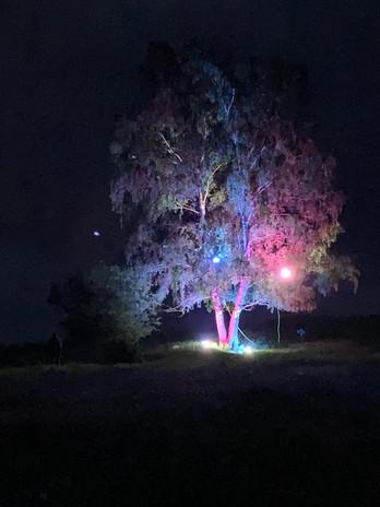 Beleuchtung Für Huntington 2020 Schwalmtal Alte Birke 2