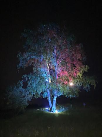 Beleuchtung Für Huntington 2020 Schwalmtal Alte Birke 1