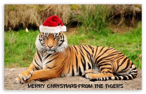 Santa Tiger.jpg