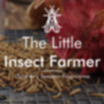 Little insect farmer cover photo.jpg