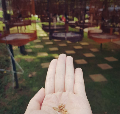 Larvae for bird.jpg