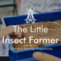 Little insect farmer cover photo v2.jpg