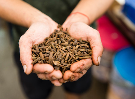 Can Maggots Fix Singapore's Food Waste Problem?